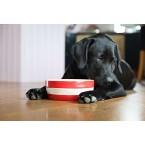 Dog Bowl Cornish Red